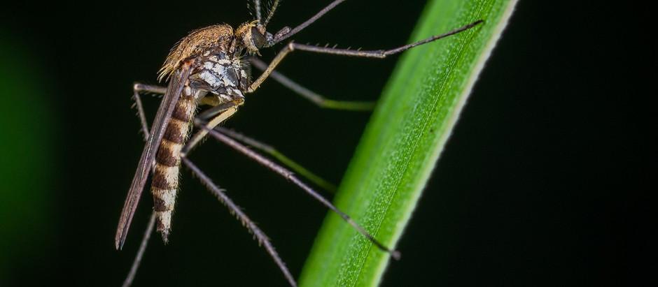 Febbre del Nilo e disinfestazioni: quale pericolo per le api?