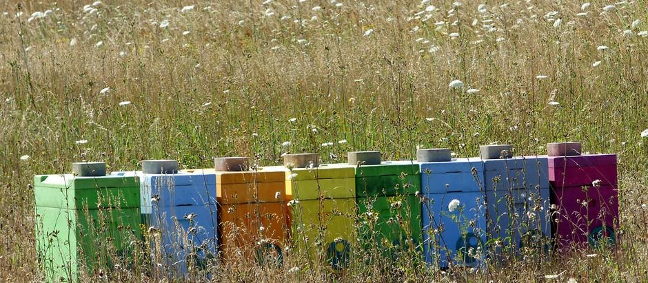 L'apicoltore e l'organismo alveare: un futuro inter-specie?