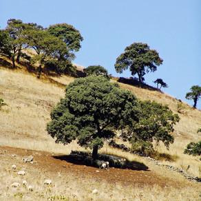 Fare apicoltura in Sardegna oggi. Alcune riflessioni.