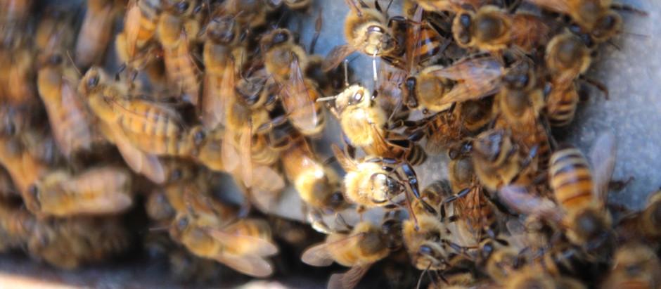 Gestire il cambio climatico: imparare dagli apicoltori