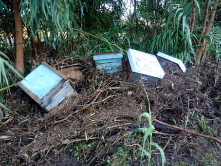 Il cambiamento climatico e l'apicoltura.