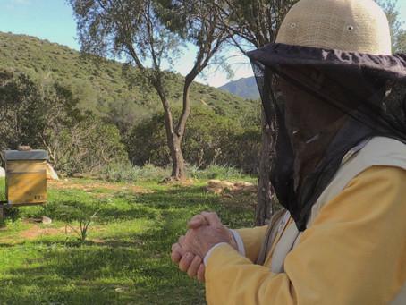 Diventare apicoltore