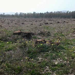 Ius soli: alberi, biomasse, green economy e apicoltura