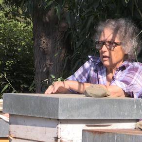 Il ronzio gentile delle apicoltrici sarde