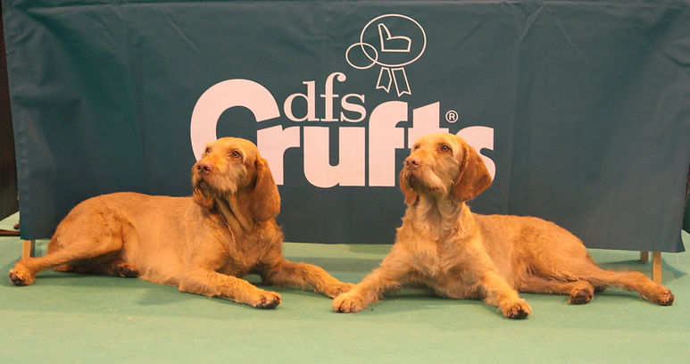 Lexi and Darci at Crufts