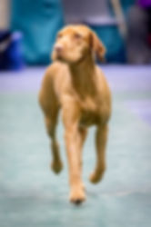 Showing | England | Miadsc Gundogs
