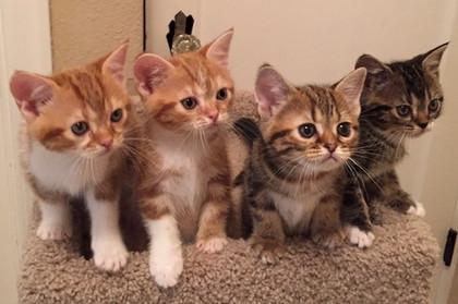 2019 Kittens
