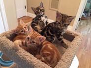 2018 Kittens