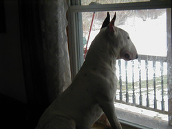 Ally - Looking out the window.JPG
