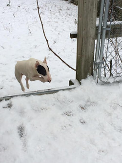 Patches in the first snow