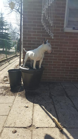 King of the flower pot