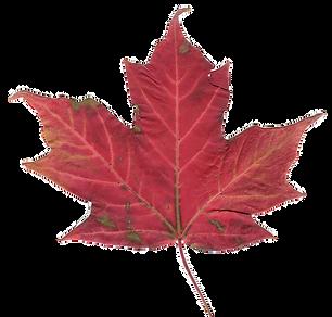Canadian_maple_leaf_2_edited.png