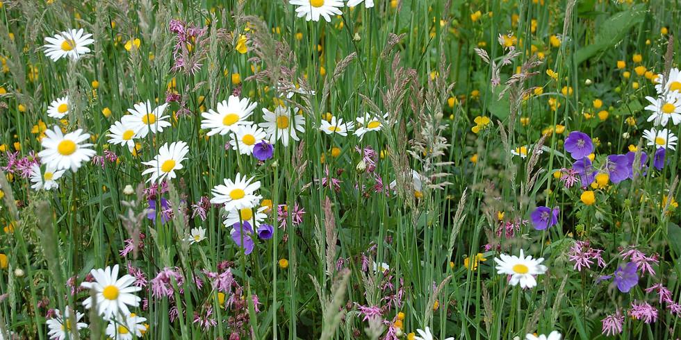 Hathern's Meadows