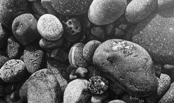 """""""Little Rocks"""""""