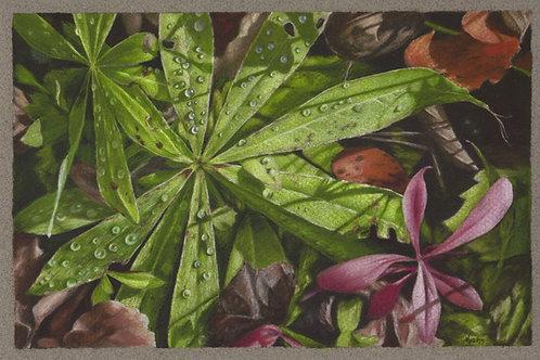 """Morning Hike""  6 x 9 Giclee Print"