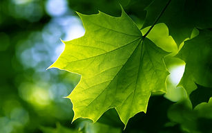 canon-photography-green-leaves-sunlight-
