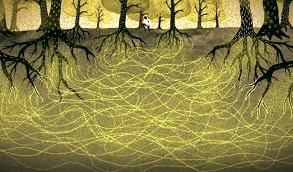 菌糸のネットワーク