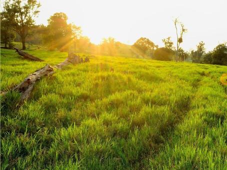 ダーチャの畑始めます