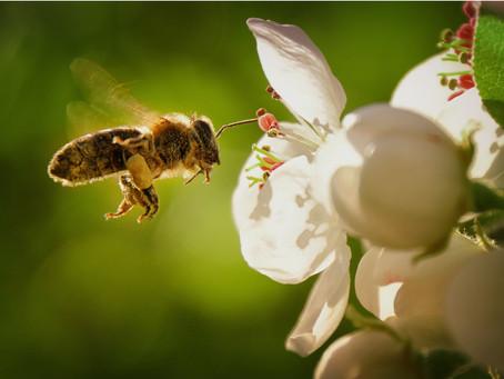ミツバチと暮らす