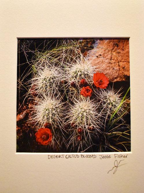 Desert Cactus Blooms 8x10 Matted Print