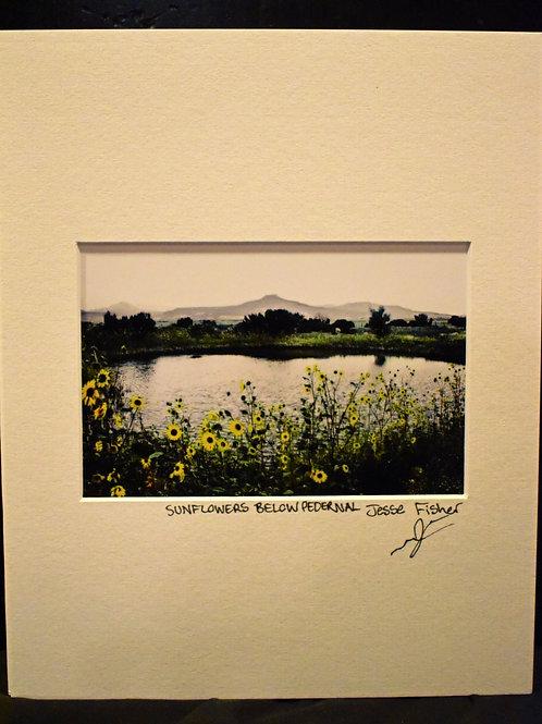 Sunflowers Below Pedernal 8x10 Matted Print