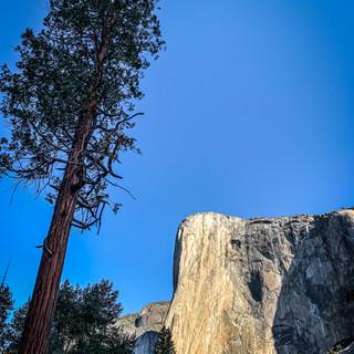 Dawn Wall Tree