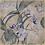 Thumbnail: Blue Orchids