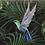 Thumbnail: Evening Hummingbird