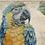 Thumbnail: Yellow Blue Macaw