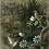 Thumbnail: Hummingbirds