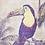 Thumbnail: Double Toucans