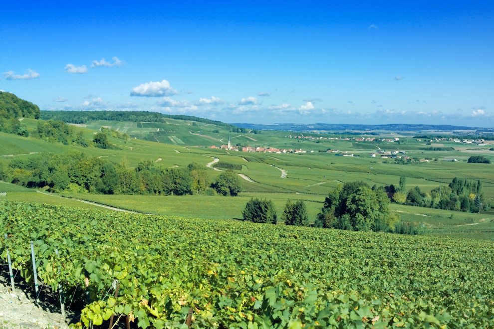 Photo of vineyards in Champagne