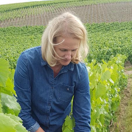 Champagne : premiers grains dans les vignes