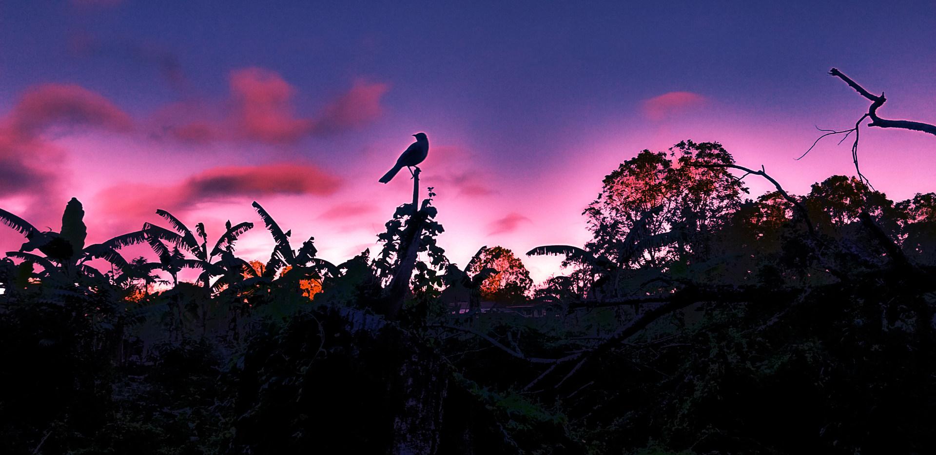 2 - Totem (Galapagos)