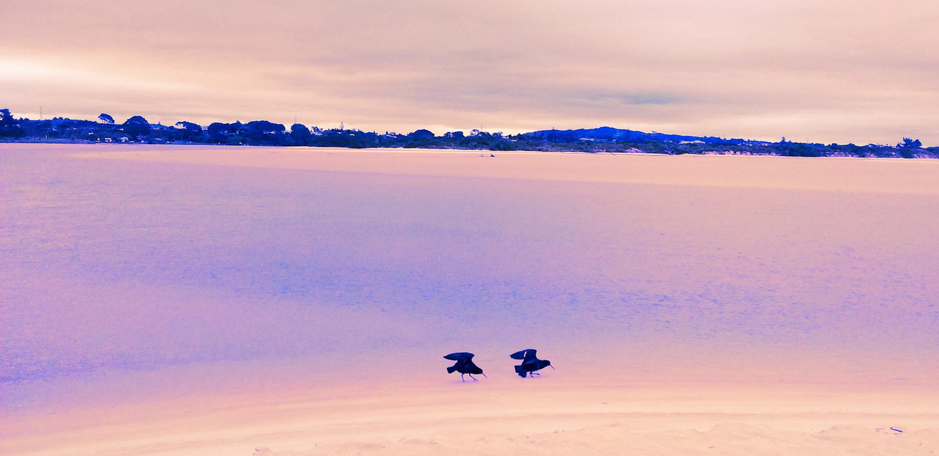 6 - Birds (Nouvelle-Zélande)