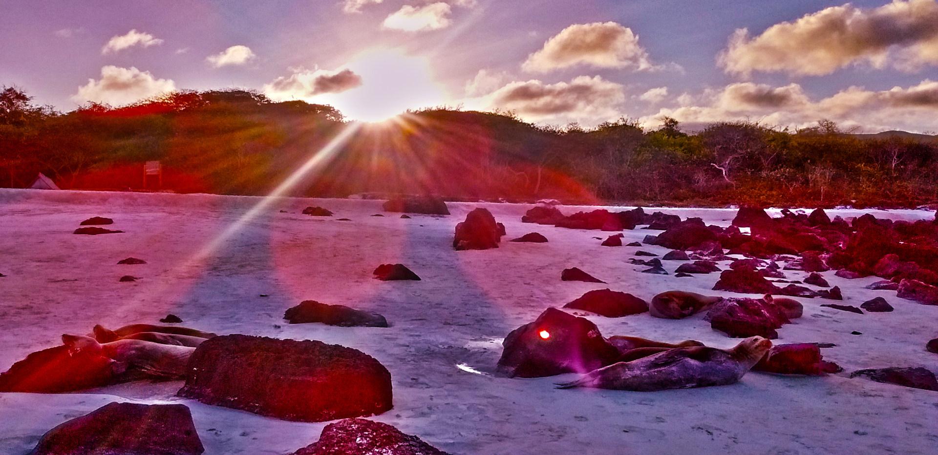 9 - Roches (Galapagos)