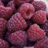Royalty Purple Raspberry
