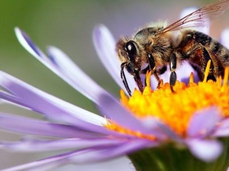 Les insectes, indispensables à notre survie, sont en train de disparaître