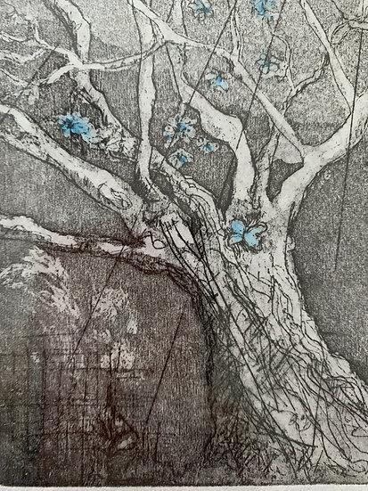 Blue Blossom on Greville Road