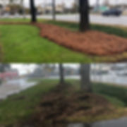 pine straw, landscaping, greenwood sc, 29649, trees, gass