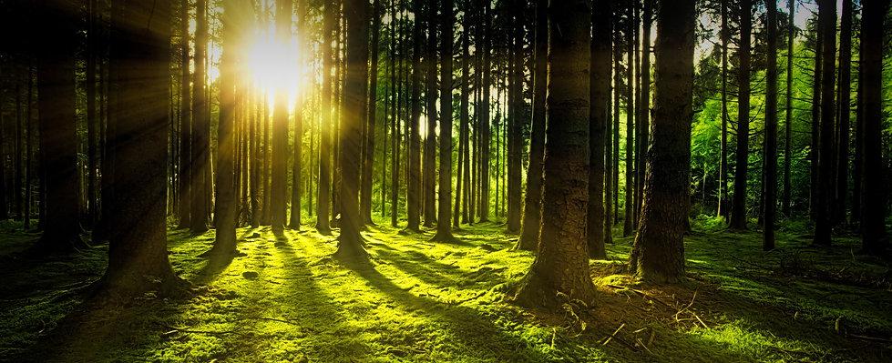 nature-3294681.jpg