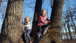 Image of Brady's daughters sitting in a tree