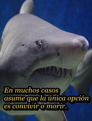 tiburon-communitymanager