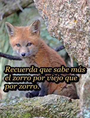 Zorro biencommunity.com