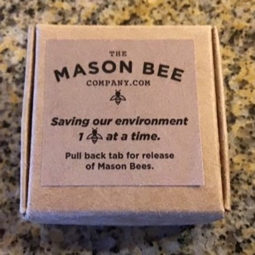 Package of 10 Mason Bee Cocoons