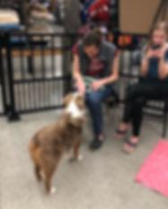 Family Dog 1 & 2.jpg