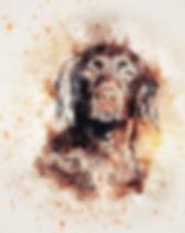 dog-2327834_1920.jpg