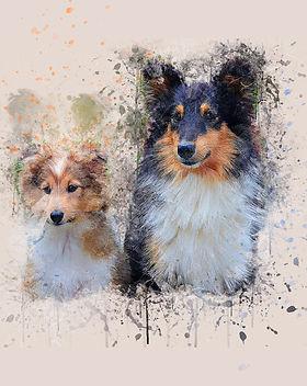 dogs-2687874_1920.jpg