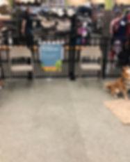 Family Dog 2 & 3 last Saturday..jpg