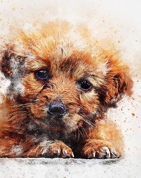dog-2655102_1920.jpg